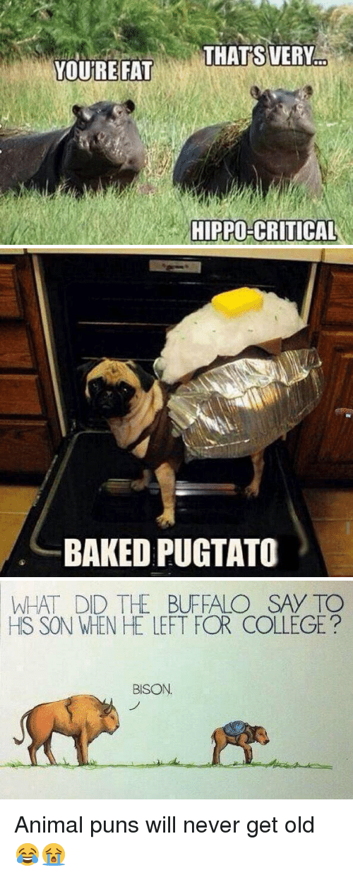 animal puns: YOURE FAT  THATS VERY  HIPPO-CRITICAL   BAKED PUGTATO   WHAT DID THE BUFFALO SAY TO  HS SON WHEN HE LEFT FOR COLLEGE  BISON Animal puns will never get old 😂😭