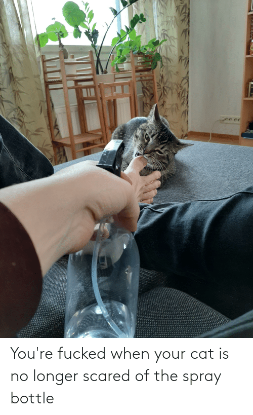 youre fucked: You're fucked when your cat is no longer scared of the spray bottle