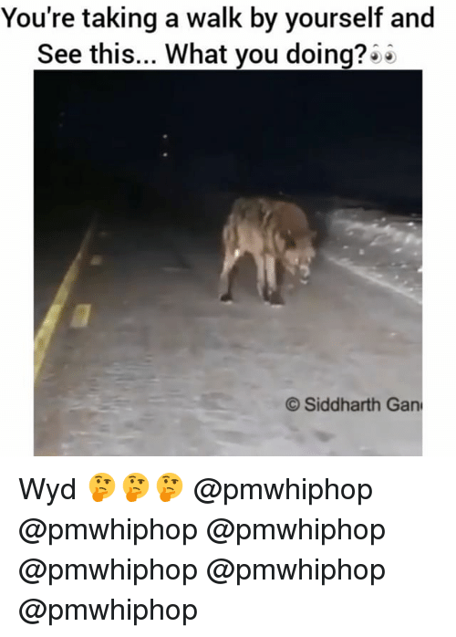 Memes, Wyd, and What You Doing: You're taking a walk by yourself and  See this... What you doing?  Siddharth Gan Wyd 🤔🤔🤔 @pmwhiphop @pmwhiphop @pmwhiphop @pmwhiphop @pmwhiphop @pmwhiphop