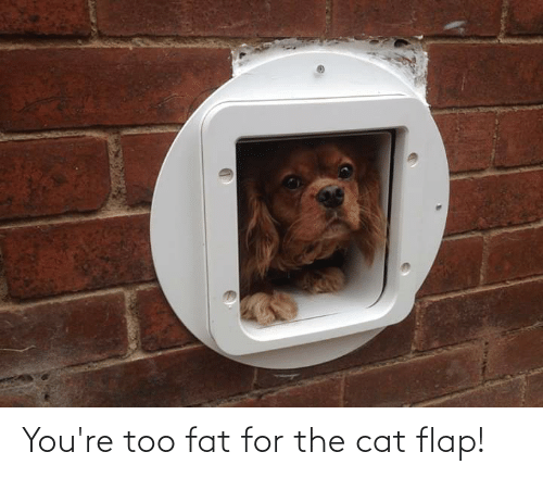 flap: You're too fat for the cat flap!