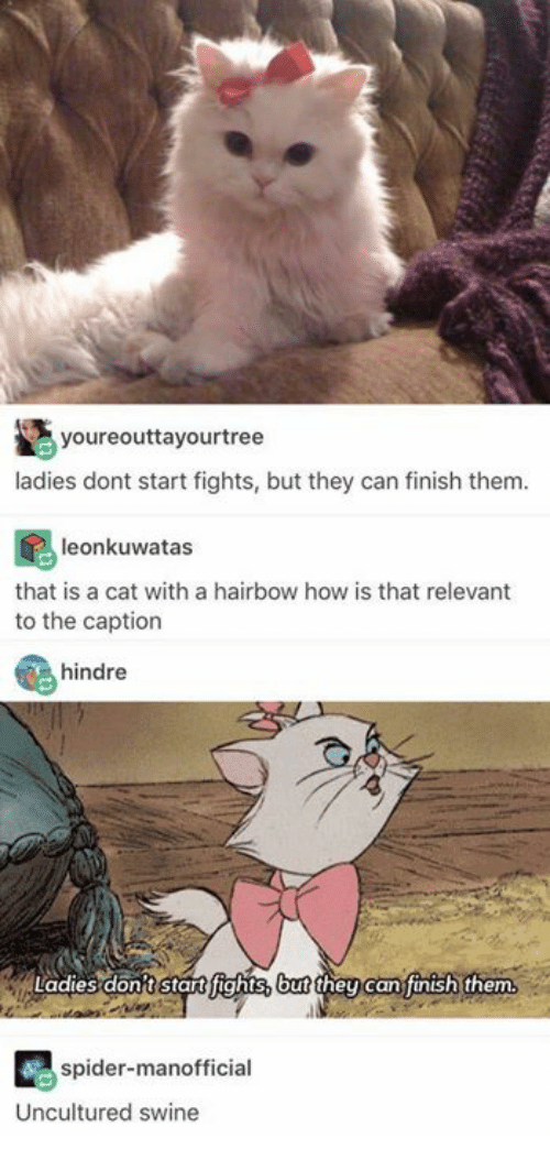 Finish: youreouttayourtree  ladies dont start fights, but they can finish them  leonkuwatas  that is a cat with a hairbow how is that relevant  to the caption  hindre  Ladies dont stat fights, but then can finish them  ney can jinish them  spider-manofficial  Uncultured swine