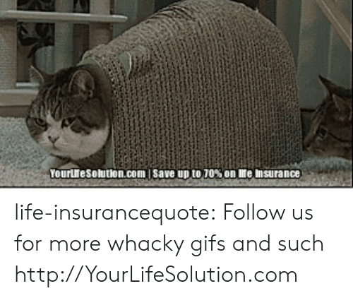 Whacky: Yourresolution.com | save up to70% on reinsurance life-insurancequote:  Follow us for more whacky gifs and such http://YourLifeSolution.com