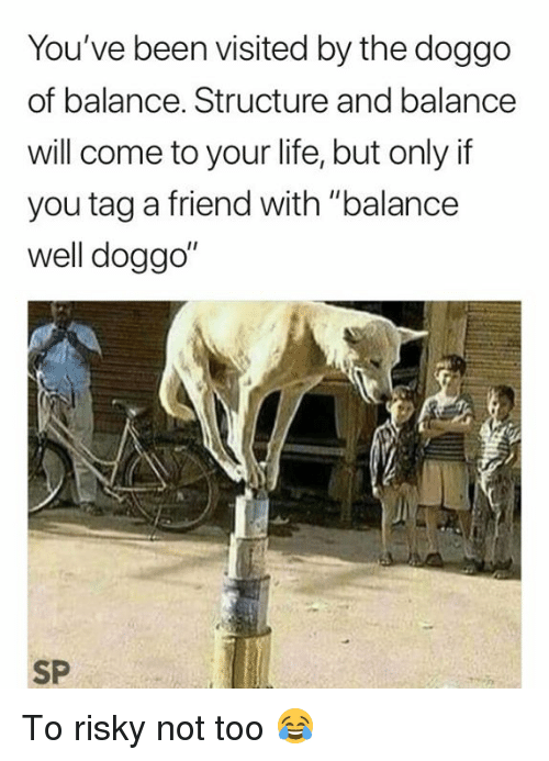 """Life, Been, and Doggo: You've been visited by the doggo  of balance. Structure and balance  will come to your life, but only if  you tag a friend with """"balance  well doggo  I1  SP To risky not too 😂"""