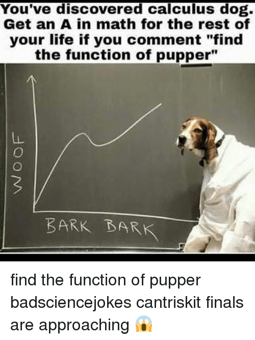 """functionality: You've discovered calculus dog.  Get an A in math for the rest of  your life if you comment """"find  the function of pupper""""  BARK BARK find the function of pupper badsciencejokes cantriskit finals are approaching 😱"""