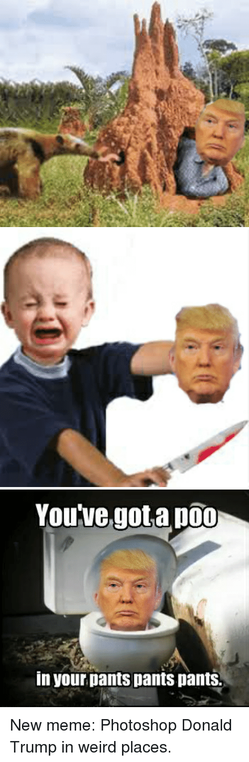 funny donald trump and photoshop memes of 2016 on sizzle