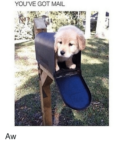 You've Got Mail: YOU'VE GOT MAIL. Aw