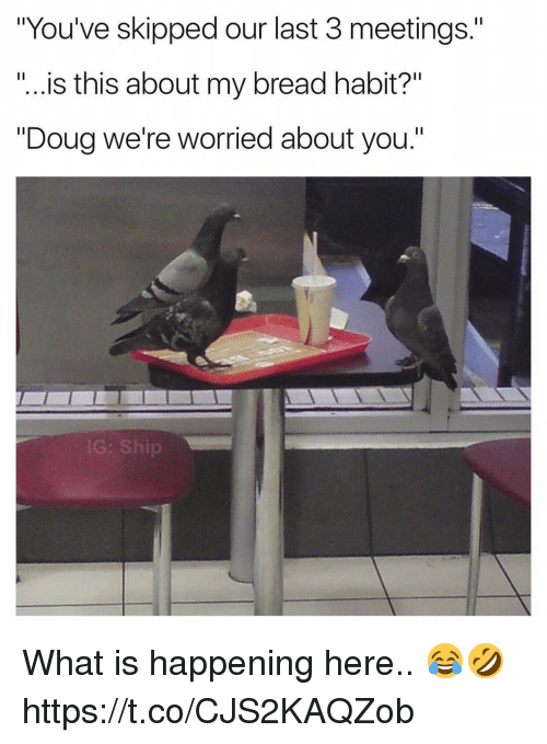 """Douge: """"You've skipped our last 3 meetings.""""  """"...is this about my bread habit?""""  """"Doug we're worried about you.""""  IG: Ship What is happening here.. 😂🤣 https://t.co/CJS2KAQZob"""
