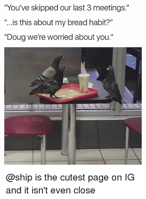 """Douge: """"You've skipped our last 3 meetings.""""  """"...is this about my bread habit?""""  """"Doug we're worried about you.""""  G: Ship @ship is the cutest page on IG and it isn't even close"""