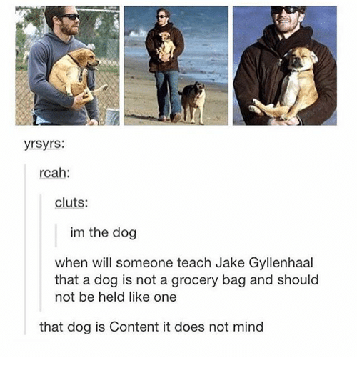 gyllenhaal: yrsyrs:  rcah:  cluts:  im the dog  when will someone teach Jake Gyllenhaal  that a dog is not a grocery bag and should  not be held like one  that dog is Content it does not mind
