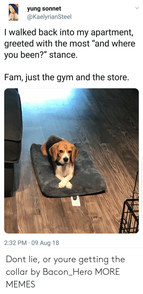"""Where You Been: yung sonnet  @KaelyrianSteel  I walked back into my apartment,  greeted with the most """"and where  you been?"""" stance  Fam, just the gym and the store  2:32 PM 09 Aug 18 Dont lie, or youre getting the collar by Bacon_Hero MORE MEMES"""