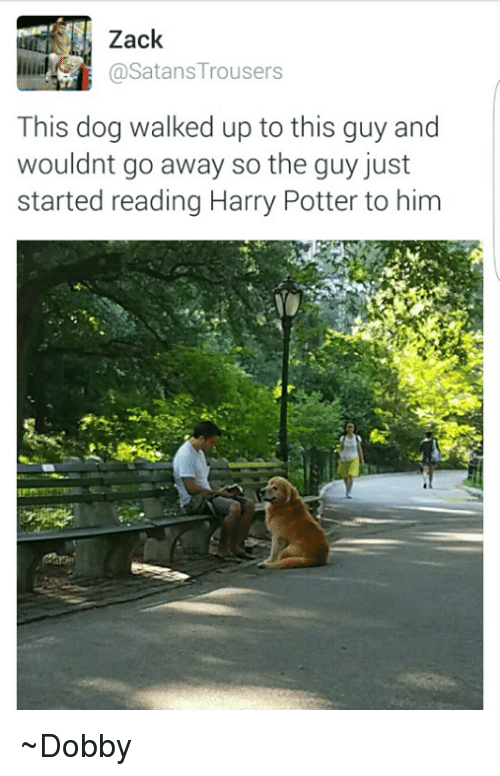 trouser: Zack  @Satans Trousers  This dog walked up to this guy and  wouldnt go away so the guy just  started reading Harry Potter to him ~Dobby