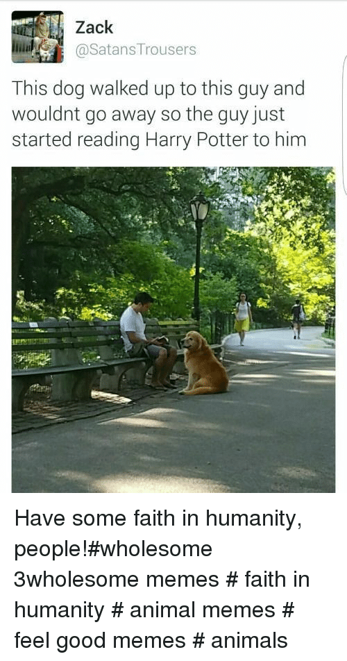 Good Memes: Zack  @SatansTrousers  This dog walked up to this guy and  wouldnt go away so the quy just  started reading Harry Potter to him Have some faith in humanity, people!#wholesome 3wholesome memes # faith in humanity # animal memes # feel good memes # animals