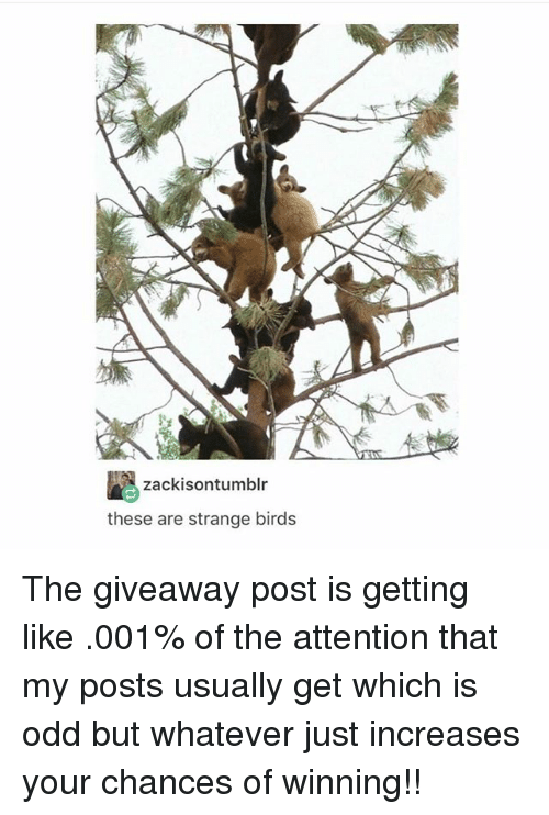 Memes, Birds, and 🤖: zackisontumblr  these are strange birds The giveaway post is getting like .001% of the attention that my posts usually get which is odd but whatever just increases your chances of winning!!