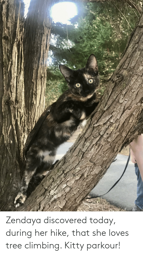 Zendaya: Zendaya discovered today, during her hike, that she loves tree climbing. Kitty parkour!