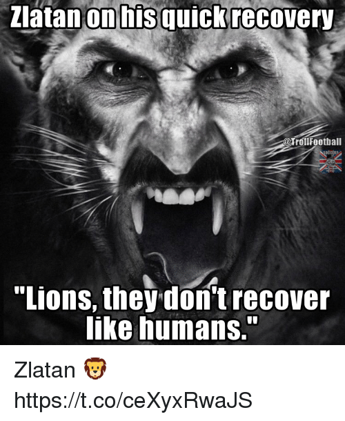 """Memes, 🤖, and They: ziatanonhis quickrecovery  TrollFootball  """"ions, they don't recover  like humans."""" Zlatan 🦁 https://t.co/ceXyxRwaJS"""