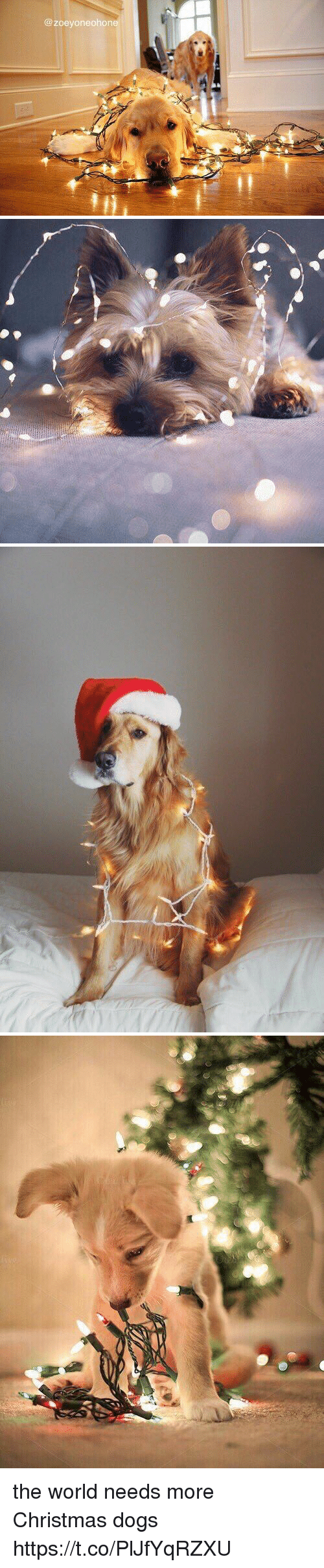 Christmas, Dogs, and World: @ zoeyoneohone the world needs more Christmas dogs https://t.co/PlJfYqRZXU
