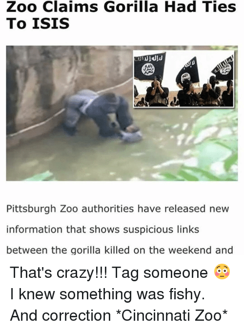 Funny Zoo Memes : Zoo claims gorilla had ties to isis pittsburgh