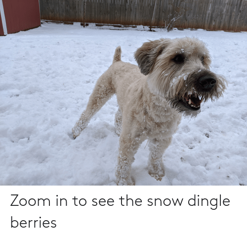 Dingle Berries: Zoom in to see the snow dingle berries