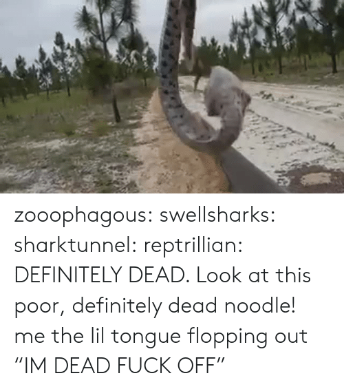 """Noodle: zooophagous: swellsharks:  sharktunnel:  reptrillian:  DEFINITELY DEAD. Look at this poor, definitely dead noodle!  me  the lil tongue flopping out   """"IM DEAD FUCK OFF"""""""