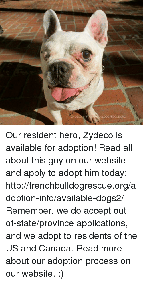 us-and-canada: ZYDECO FR  ULLDOGRESCUEORG Our resident hero, Zydeco is available for adoption! Read all about this guy on our website <location, likes, dislikes> and apply to adopt him today: http://frenchbulldogrescue.org/adoption-info/available-dogs2/  Remember, we do accept out-of-state/province applications, and we adopt to residents of the US and Canada. Read more about our adoption process on our website. :)